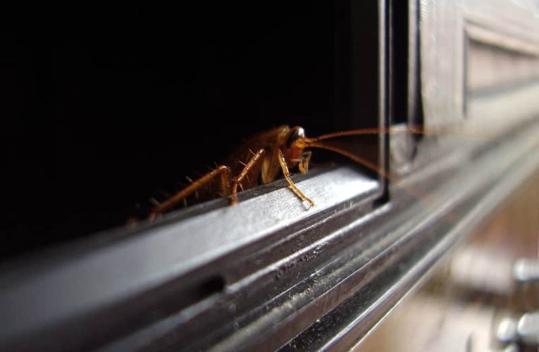 Where Do Pests Hide and Come Out of Every Night?