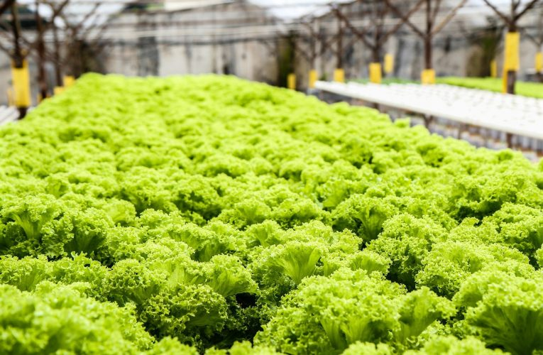 Hydroponic Grow Tent – A modern way of gardening